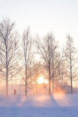 Winter beautiful landscape with the sun, frost and fog.