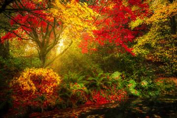 Dreamy fall foliage landscape in Seattle's Washington Park Arboretum botanical Garden