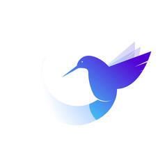 Hummingbird logo. Illustration of a bird species violetears Colibri. Vector drawing of an animal