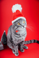 Grey tabby cat wears Santa's hat on red background. Christmas and New year concept