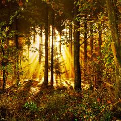 Sonnenstrahlen in einem mystischen Herbstwald im Morgennebel