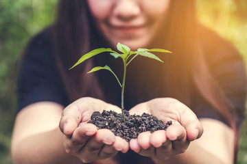 Closeup image of woman's hands holding soil and small tree to glow with green background