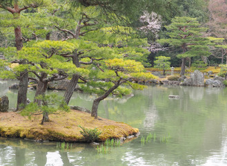 beautiful bonsai trees In a japanese style garden. Kyoto Japan
