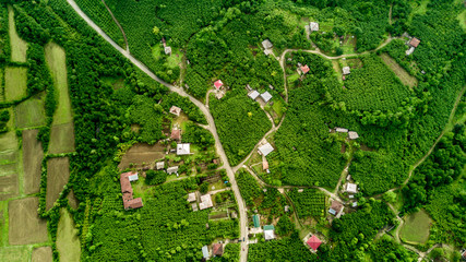 Aerial view of Hazelnut gardens in Samegrelo, Georgia. 2017 summer