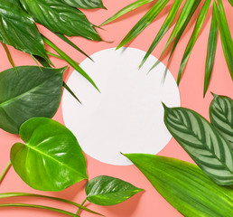 Wall Mural - tropical leaves on pink background