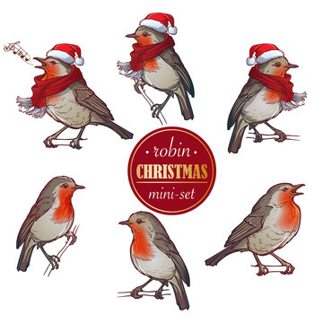 Christmas Robin. Set of 6 hand drawn paintings of Robin in different angles with or without hat and scarf