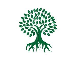 Growth root  tree capital