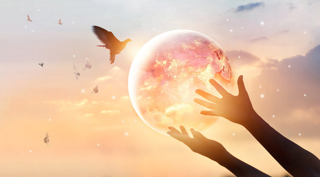 Woman touching planet earth of energy consumption of humanity at night, and free on sunset background, hope concept, Elements of this image furnished by NASA