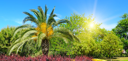 Summer park with tropical palm trees, flower beds and sun.