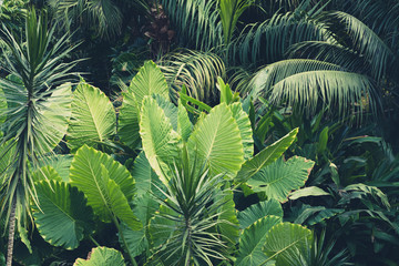 palm trees, jungle - tropical plants background