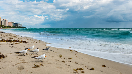 Miami Beach. Florida. Miami Beach. Florida. Birds on the beach sand.