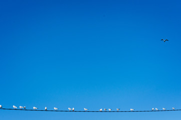 seagulls on a cable with negative space