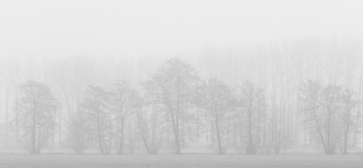 Fototapeta Jesienne Drzewa obraz