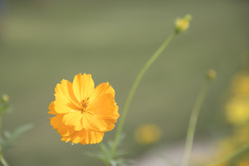 Yellow flowers on the background are naturally blurred.