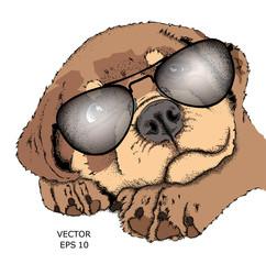 A dog in glasses. Hipster dog. Vector illustration