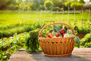 Organic vegetables in wicker basket
