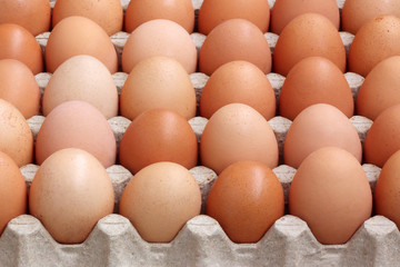 Brown chicken eggs in the tray.