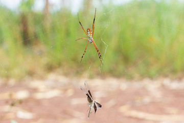 Spider is waiting for the victim,Spider with spider web