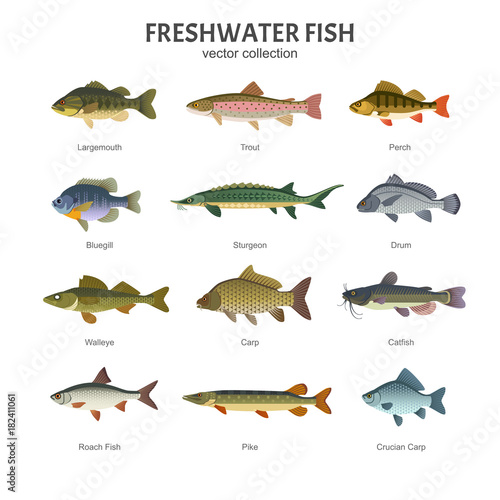 Freshwater fish set vector illustration of different for Texas freshwater fishing license