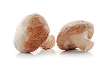 Shiitake mushroom isolated on white background