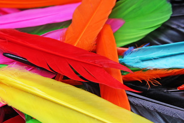 Beautiful rainbow color colored bird feathers. Parrot colors goose duck colorful painted feathers. Feather texture background or wallpaper for any concept. Studio photo.