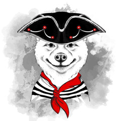 Portrait of the akita inu dog  in a pirate hat. Vector illustration.