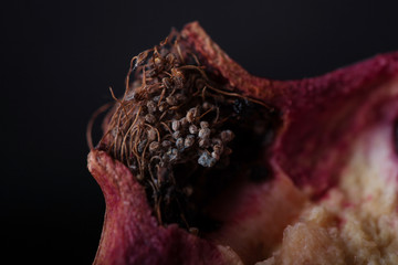 dry garnet inflorescence in a section on macro photography