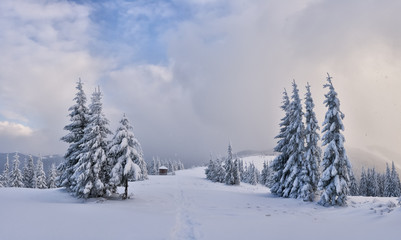 Fantastic winter landscape with snowy trees. Carpathian mountains, Ukraine, Europe. Christmas holiday concept