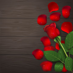Red rose and petals with drops of water on wooden background. Greeting card for Valentine's day, women's day, mother's day, birthday. Top view with space for your text. Vector illustration