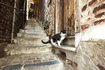 Cat on a step, Impassa des Ursulines, Coteaux de la Citadelle, Liege, Wallonia, Belgium