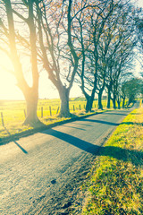 Beautiful rural road with trees and sunlight in Spring, Scotland