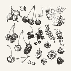 Ink drawn collection of berries