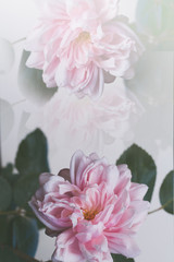 Beautiful pink roses artistic background