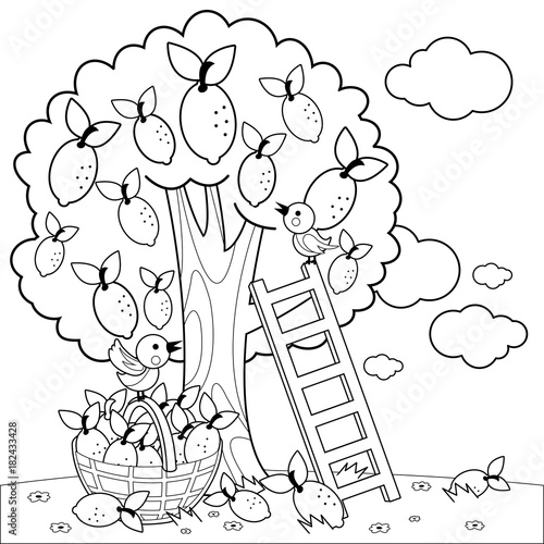 Lemon tree harvesting. Coloring book page\