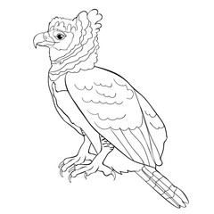 coloring harpy bird in profile.  illustration