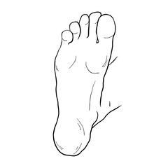 the foot male up sole. vector illustration