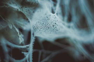 gefrorene Spinnweben gruselig zu Halloween