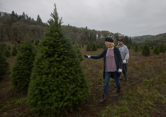 A couple searches for a Christmas tree at a farm in McMinnville, Oregon