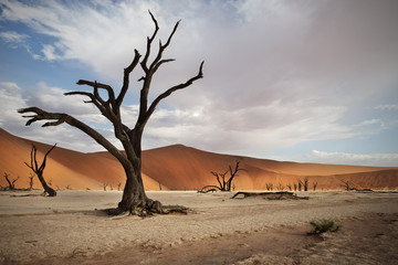 Dead camel thorn trees and sand dunes, Namibia, Africa