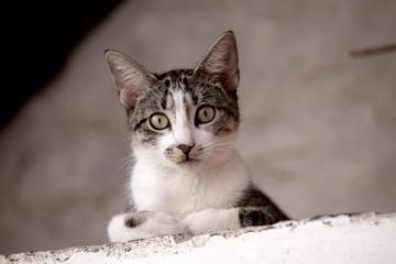 Cat, Praia, Santiago, Cape Verde