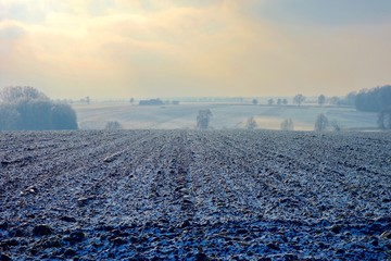 frozen farmland and trees on cold hazy winter