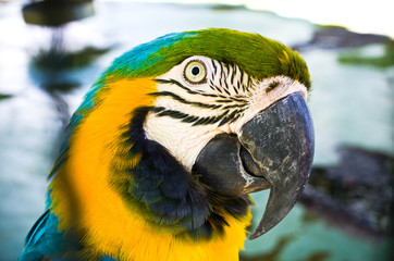 Colorful head of parrot
