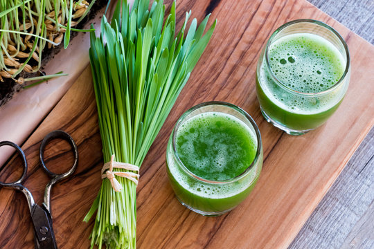 Two shots of barley grass juice with freshly harvested barley grass