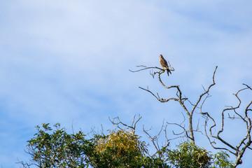 Bird on branch with blue sky