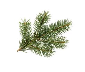 Fir tree branch. Pine branch.
