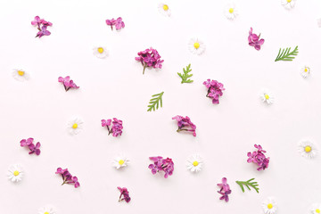 Composition with daisy and violet lilac flowers