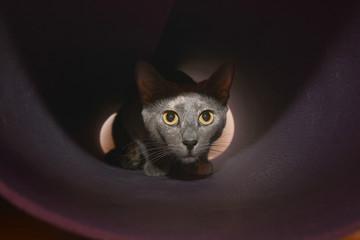 Cat love look - tender, animals, eyes, close up, kitten, baby, grey, yellow