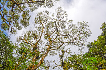 Looking Up to the Canopy of a Cloud Forest