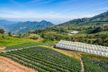 Vegetable cultivation on the Mountain in the sierra at the Northern of Thailand (Nan)