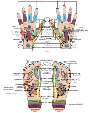 Traditional alternative heal, Acupuncture - Foot and hand Scheme Vector Illustration